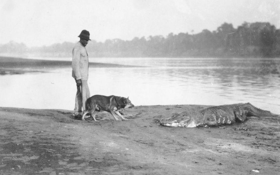 Crocodile du Rio Guaporé