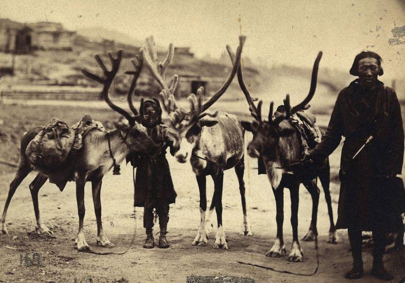 Tongouz avec leurs rennes
