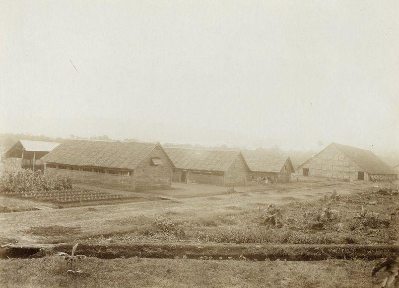 Maisons pour les coolies, plantation d'Erima