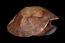 Ecaille de tortue (pupu) et flûte de pan (iawom)
