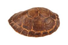 Carapace de tortue