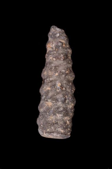 Sculpture phytomorphe