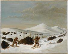 Chasse au bison dans la neige