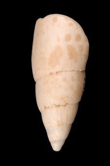 Herminette-gouge (lame)