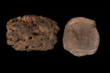 Un amas de ambre gris et un fragment de peau sechée
