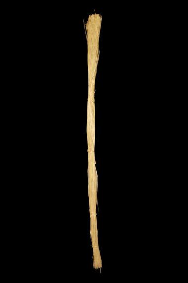 Palme de cocotier