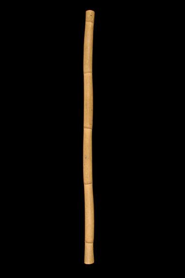 Bambou à eau