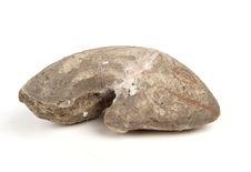 Sculpture zoomorphe (poisson)