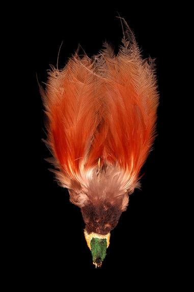 Ornement de plumes
