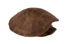 Carapace de tortue frottée