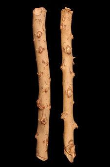 Echantillon de bois