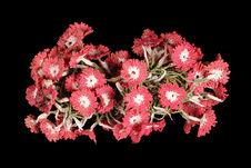 Petite guirlande de fleurs de coton