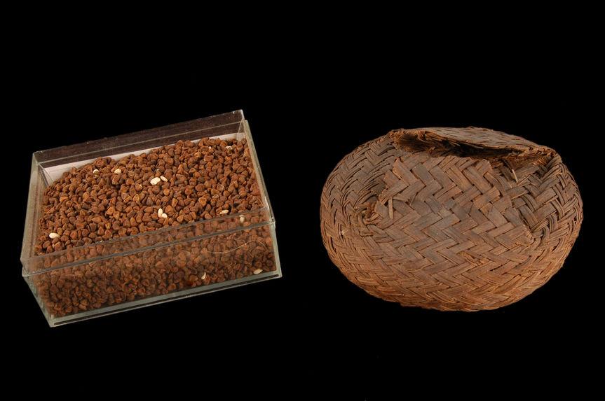 Petit panier contenant des graines pour la teinture et un lot de graines