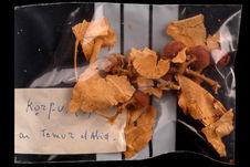 Branche et feuilles de grewia villosa