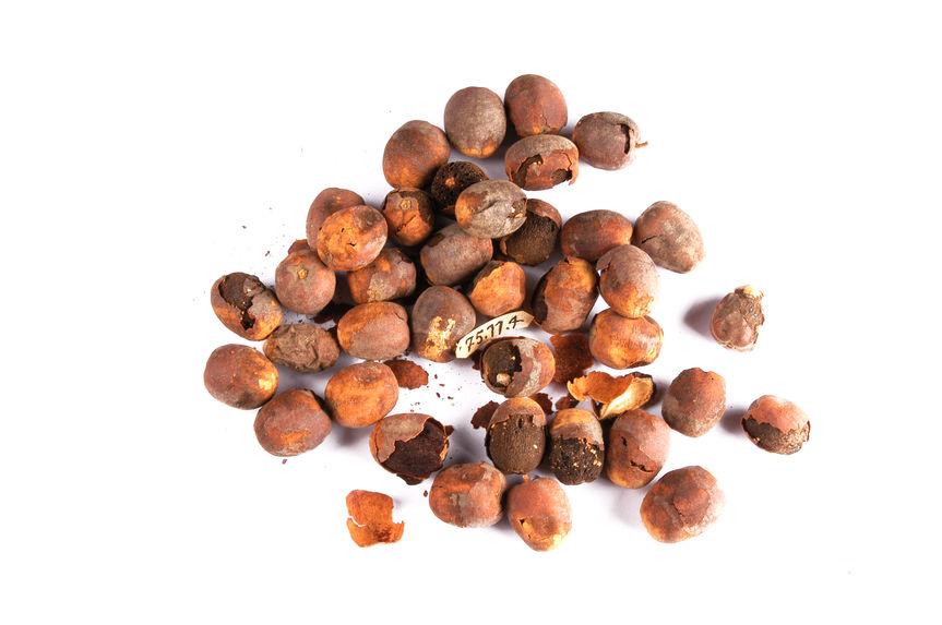 Echantillon végétal
