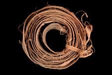 Echantillon d'écorce pour faire des cordes