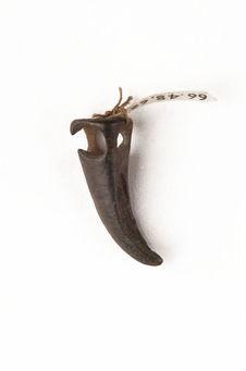 Amulette, imitation de griffe d'animal
