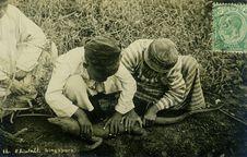 Malayan Monitor, Malaya, collection of the artist