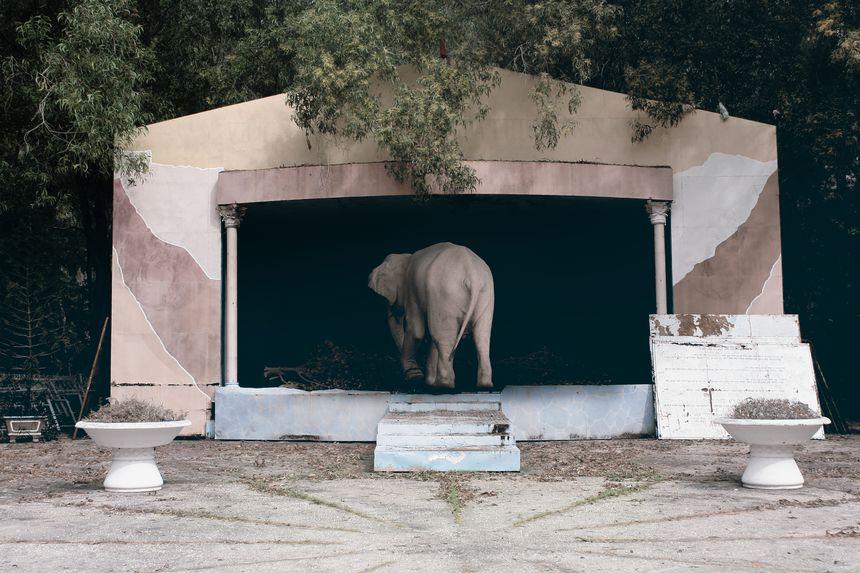 Albino Elephant, Road to Penang