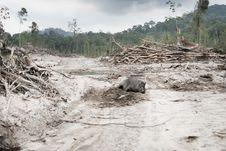 Wild Boar, Road to Penang