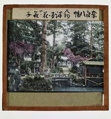 Sans titre [prises de vue dans un jardin japonais]