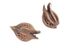 """Amulette : graines """"griffes de Garuda&quot"""