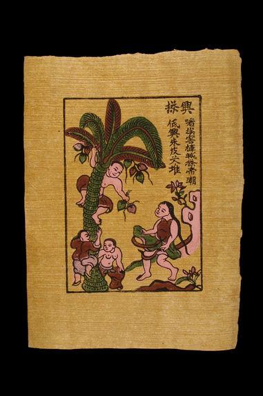 Image populaire :  la cueillette des noix de coco