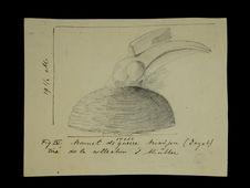 Bonnet de guerre Biadjou (Dayak)