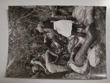 A  Achouka, chez les Noirs Mokandé, le dépeçage de l'éléphant