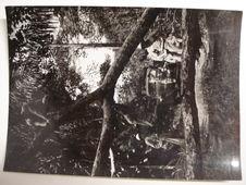 Entre Makoua et Ouesso dans la forêt.