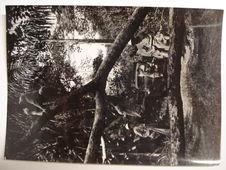 Entre Makoma et Anesso dans la forêt, des arbres nous barrent la route