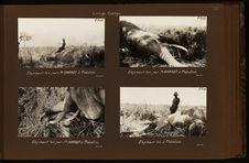 Eléphant tué par M. Haardt