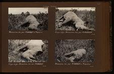 Rhinocéros tué par M. Haardt