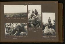 Eléphant tué par le commandant Bettembourg