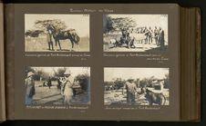 Jeune antilope chevaline à Fort-Archambault