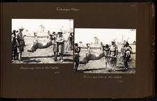 Chasse aux lions à Am-Dafok