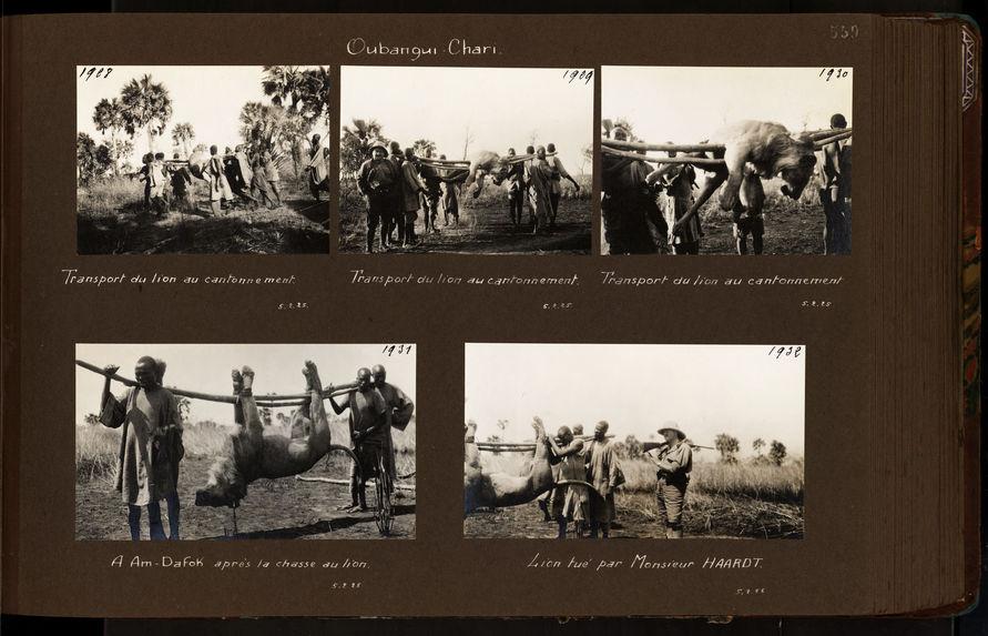Lion tué par Monsieur Haardt
