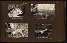 Le lion tué à Am-Dafok