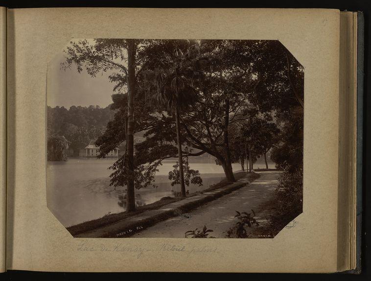 Lac de Kandy - Kitoul palms