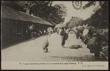 La grue sacrée se promène sur le marché de Luang Prabang