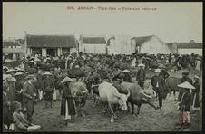 Foire aux bestiaux