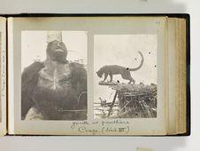 Panthère, Congo