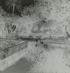 Marrakech [jardin Majorelle]