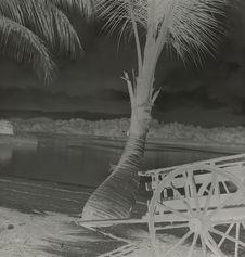 Sans titre [une charrette à côté d'un cocotier]