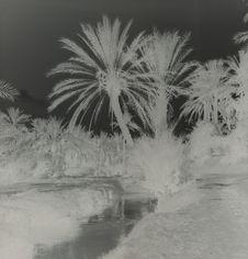 Gabès, la palmeraie