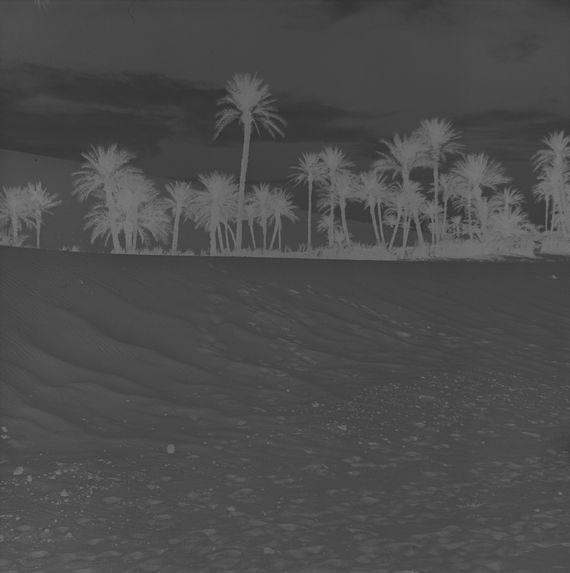 Sans titre [Paysage de palmiers]