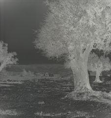 Mont des Oliviers [des oliviers]