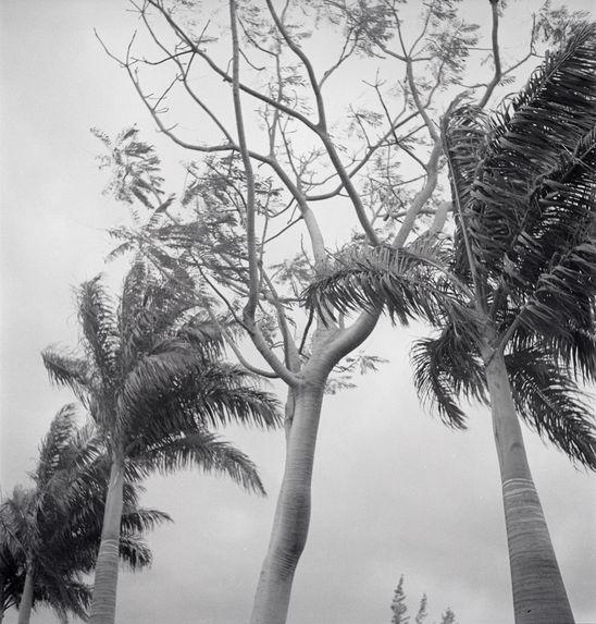 Sans titre [arbres]