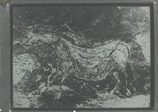 Gravure de chevaux superposés de la grotte de Lascaux
