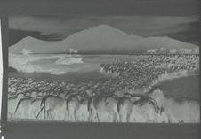 Moutons traversant un gué